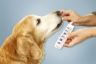 Medication Errors Happen to Pets, Too