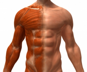 Muscle Problems with Cholesterol Medications
